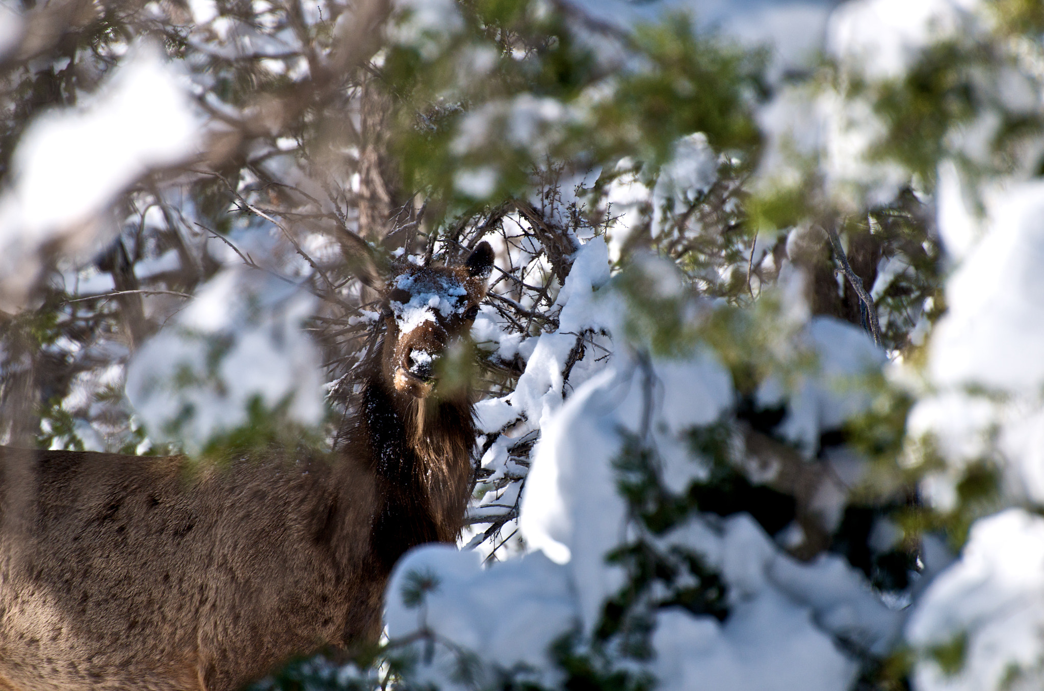 Photograph Deer Snow Mask by Brian Cowie on 500px