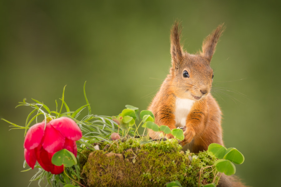 lovely look by Geert Weggen on 500px.com