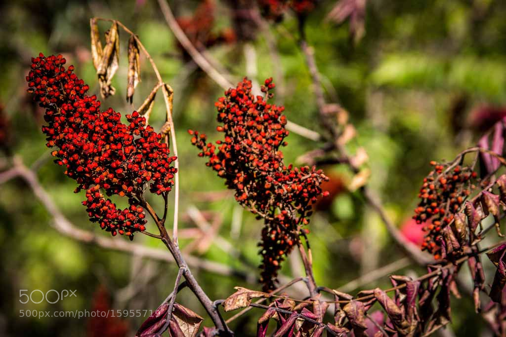 Photograph Very Berry by Tamara Pietsch on 500px