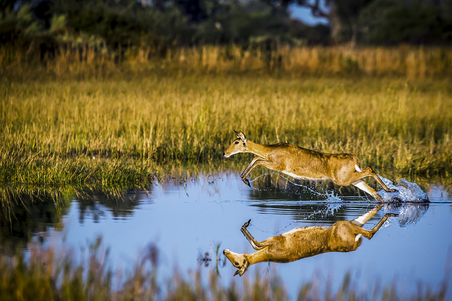 Still Water by Chris Fischer on 500px.com