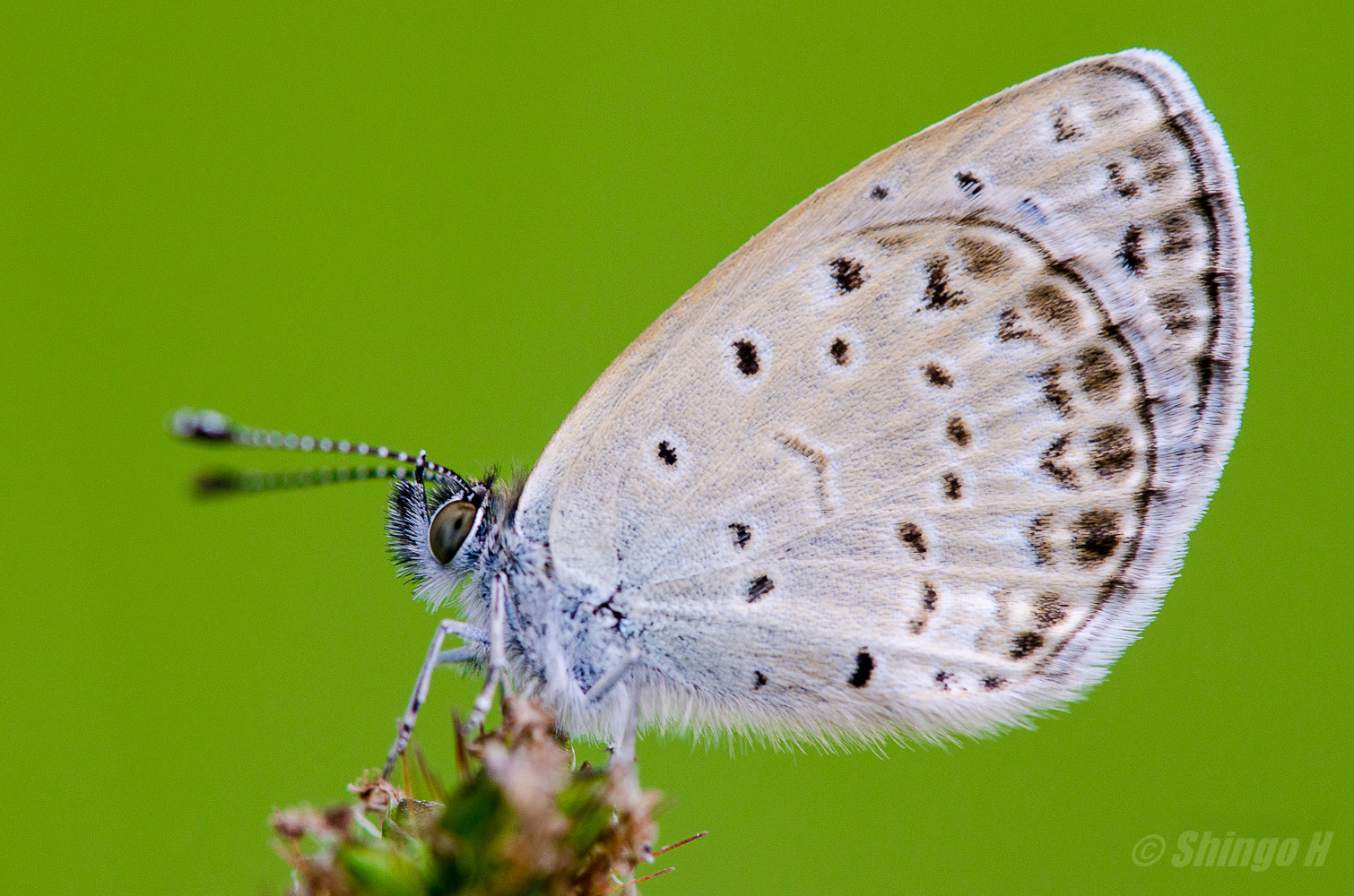 Photograph Butterfly by Shingo Hama on 500px
