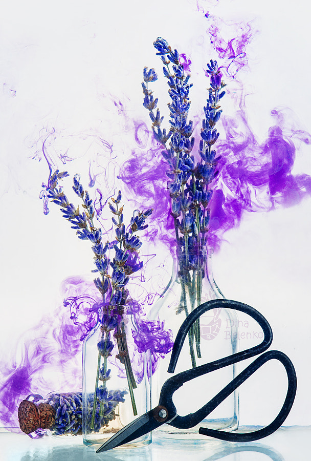 Scent of lavender by Dina Belenko on 500px.com