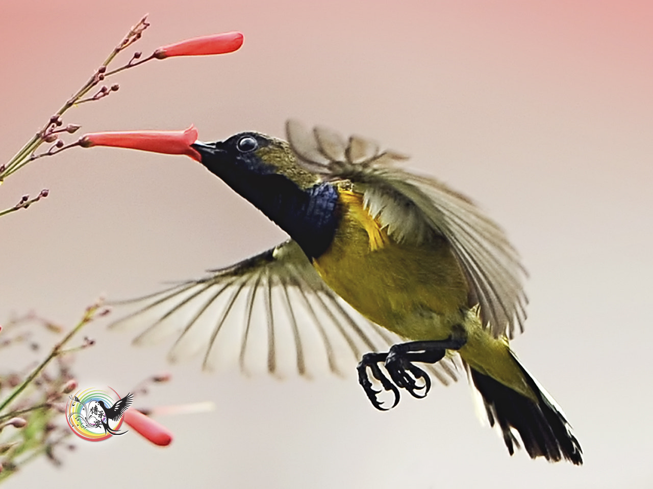 Photograph Olive-backed Sunbird by Andy Fu on 500px