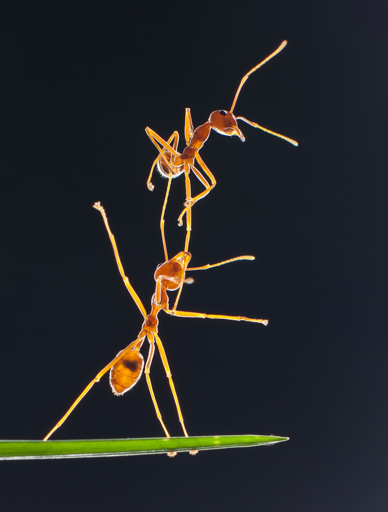 Photograph HE AIN'T HEAVY. HE'S MY ANT BROTHER by Agoes SK on 500px
