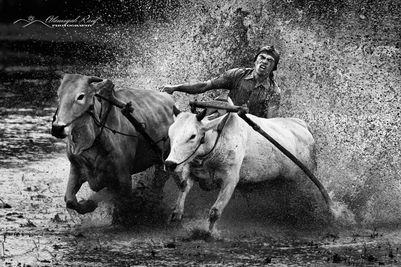"""Photograph The Spirit of Pacu Jawi"""" by Alamsyah Rauf on 500px"""