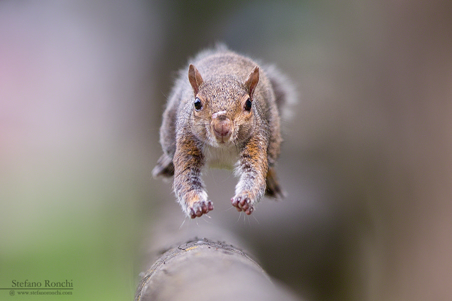 The run by Stefano Ronchi on 500px.com