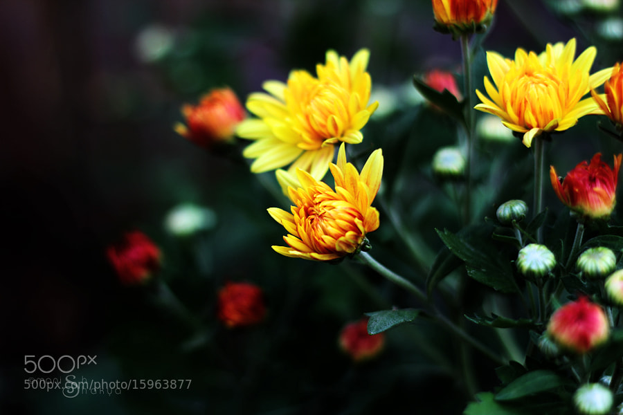 Blossoms of the Season by Manish Shakya (MrShakya)) on 500px.com