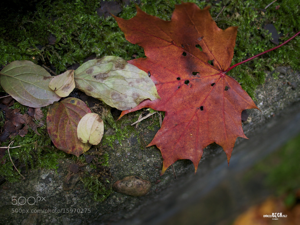 Photograph Colors of Autumn 2 by Andreas Beck on 500px