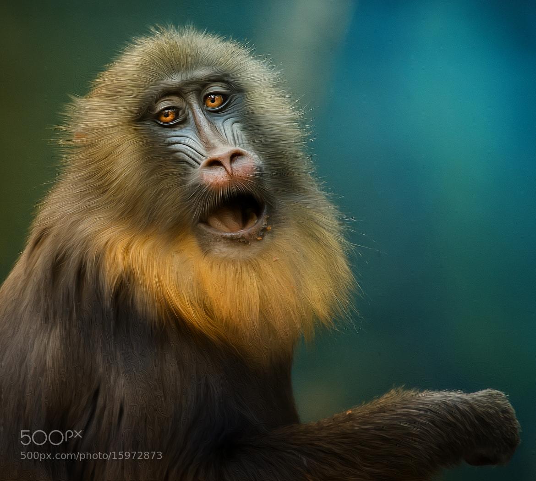 Photograph ape by Detlef Knapp on 500px