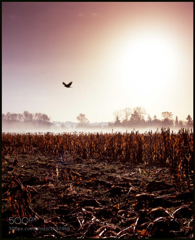 Photograph Corvus Corax by Troy Zdzieblowski on 500px