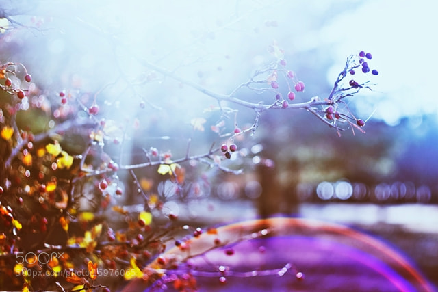 Photograph октябрь by Kristina Manchenko on 500px