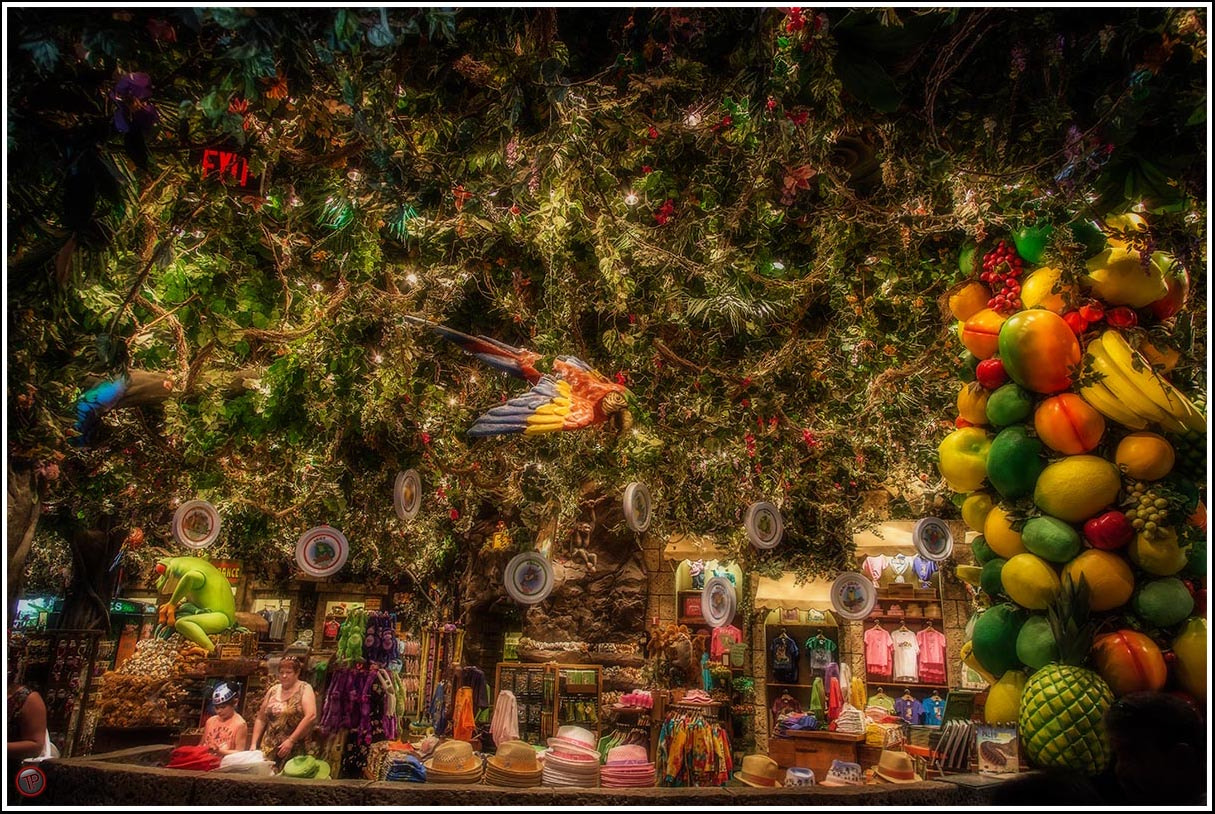 Photograph The Rainforest Cafe. by Tim Pursall on 500px