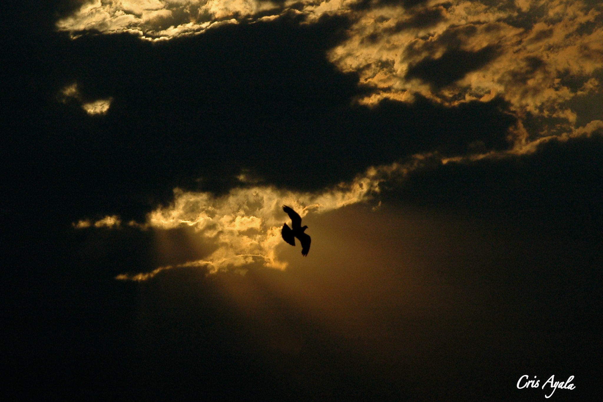 Photograph Flying high... by Cris Ayala on 500px