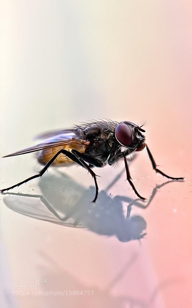 Photograph Fly by Kayman Studio on 500px