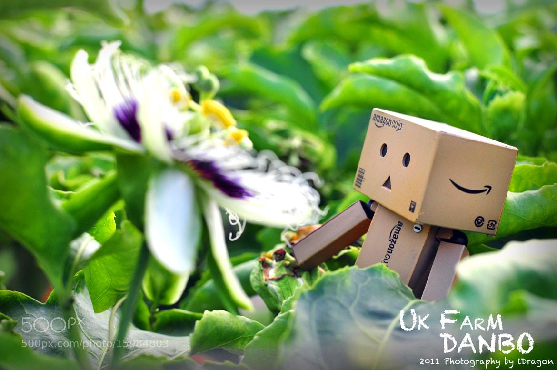 Photograph UK Farm - Danbo Monogatari by iDragon Studio on 500px