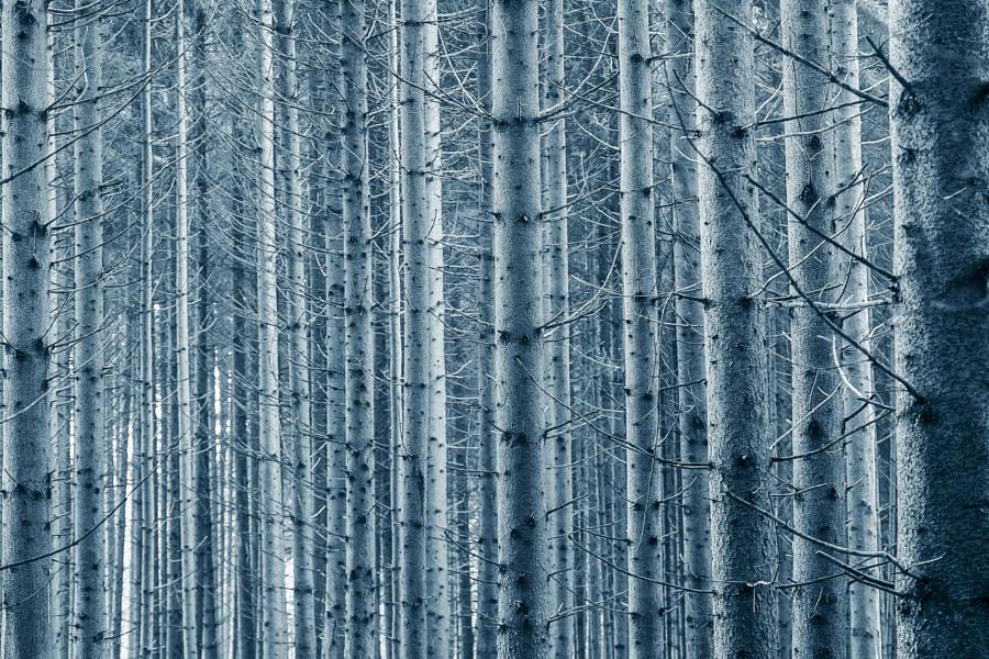 trees trees