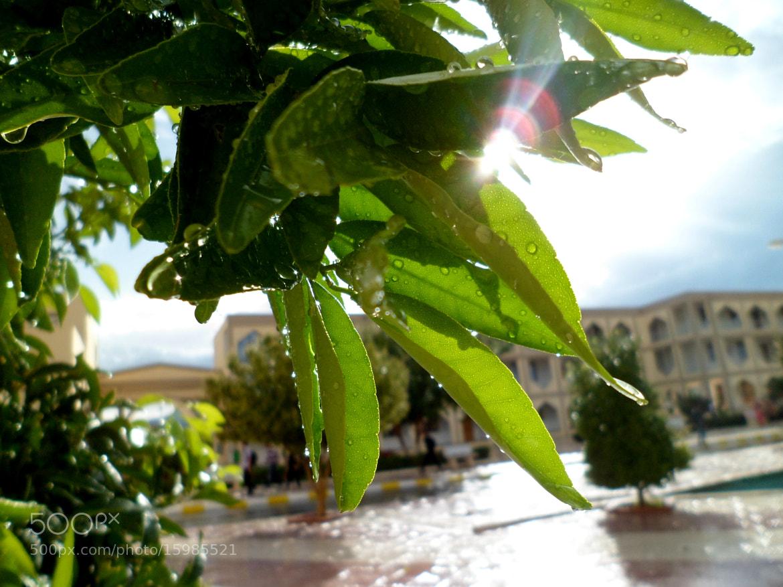 Photograph rainy yet sunny by Happy Pain on 500px