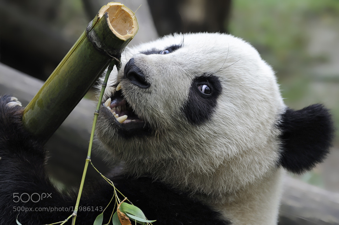 Photograph Fuhu & Bamboo by Josef Gelernter on 500px