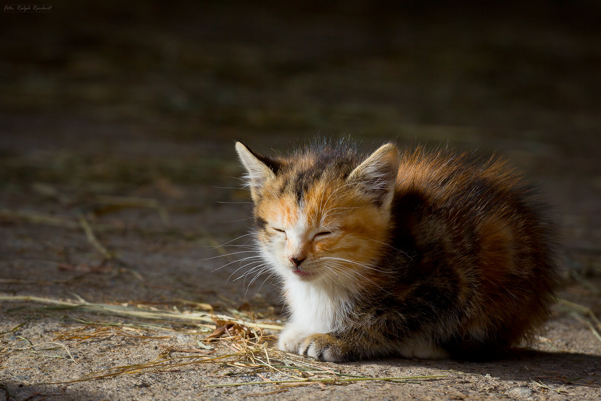 Photograph 3 weeks young by Ralph Reichert on 500px