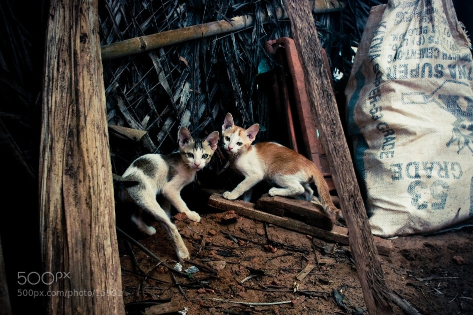 Photograph Timid cats by Anna Vesna on 500px