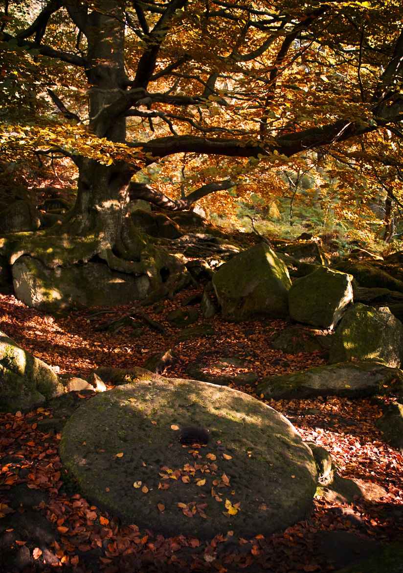 Photograph Padley Gorge - Autumn by Chris Davis on 500px