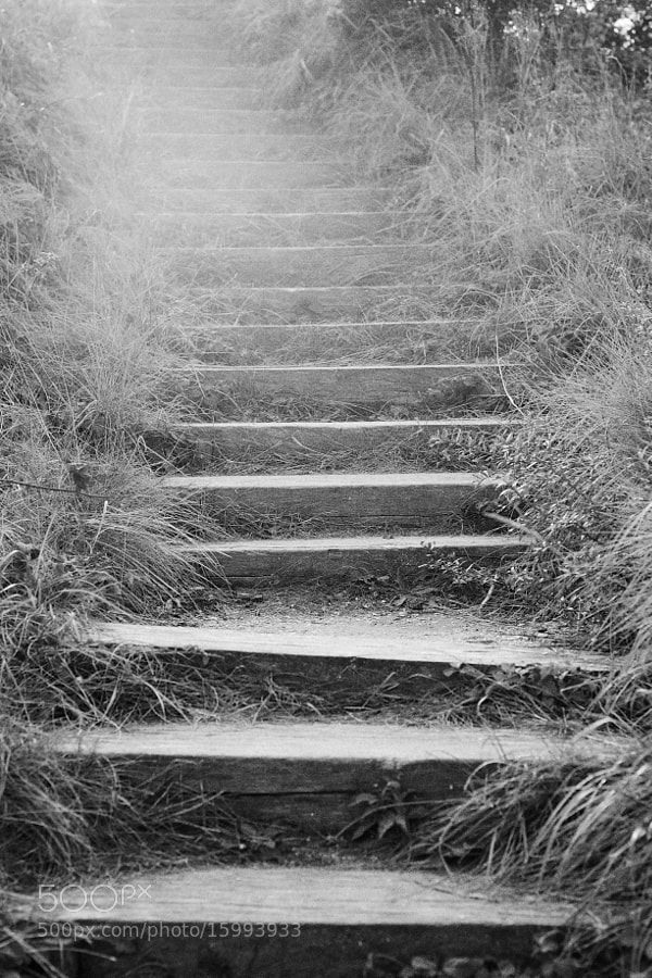 Endless steps,