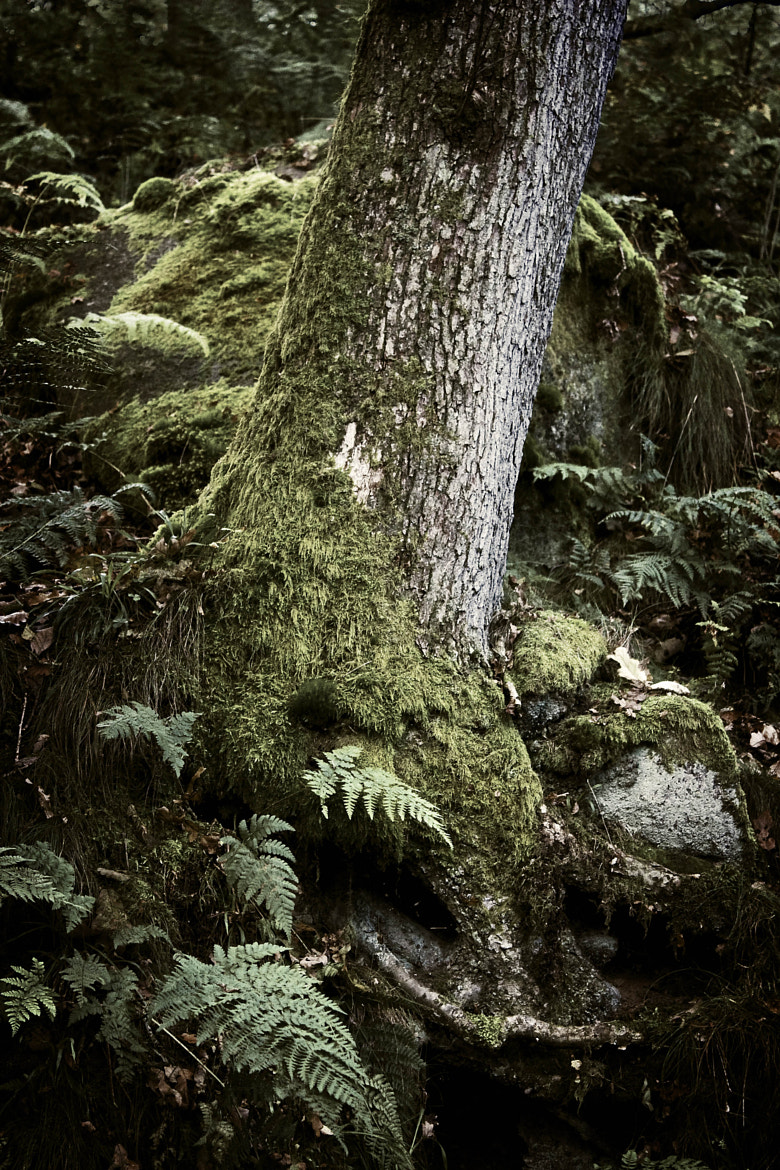 Photograph Ancient Woodland by Chris Davis on 500px