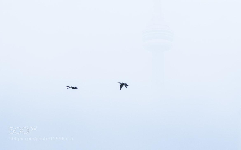 Photograph Up High by Rémi Carreiro on 500px