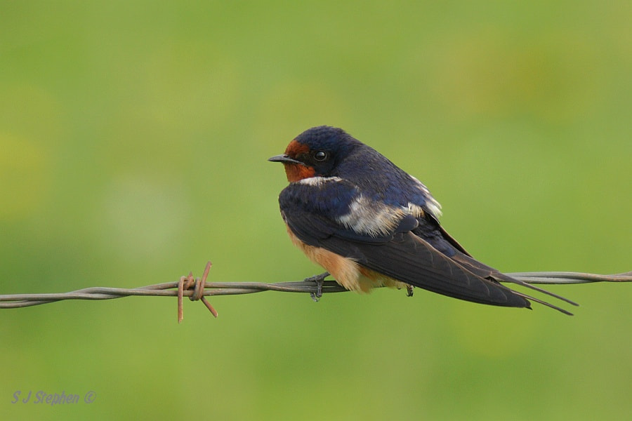Photograph Farm Field Perch by Stephen Stephen on 500px