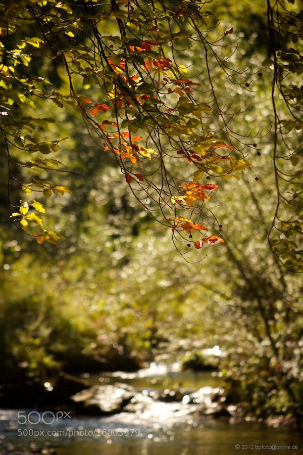 Photograph first leaves of fall by Benno Pütz on 500px