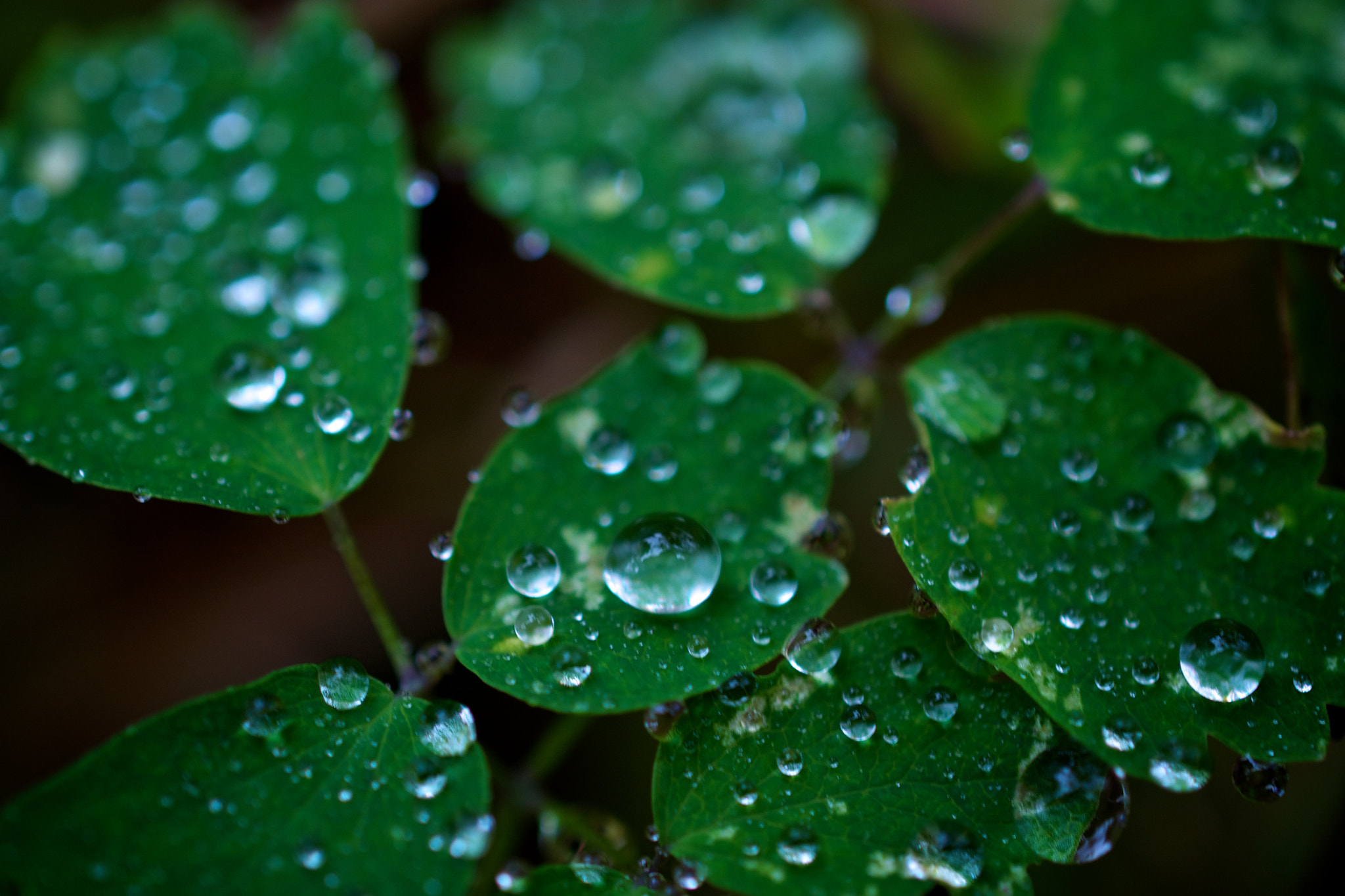 Photograph Dew and Leaves by Cory Zanker on 500px