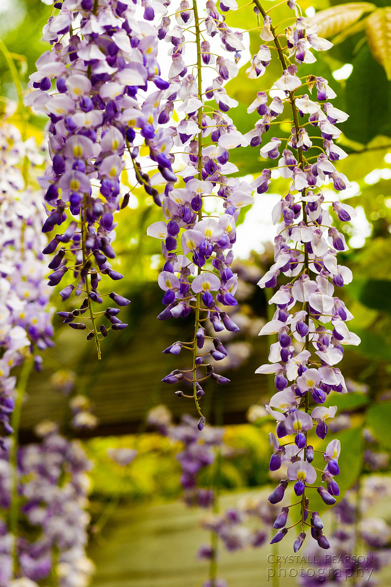 Photograph Wisterial Cascade by Crystall Pearson on 500px