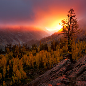 Valley of Gold by Danny Seidman on 500px.com