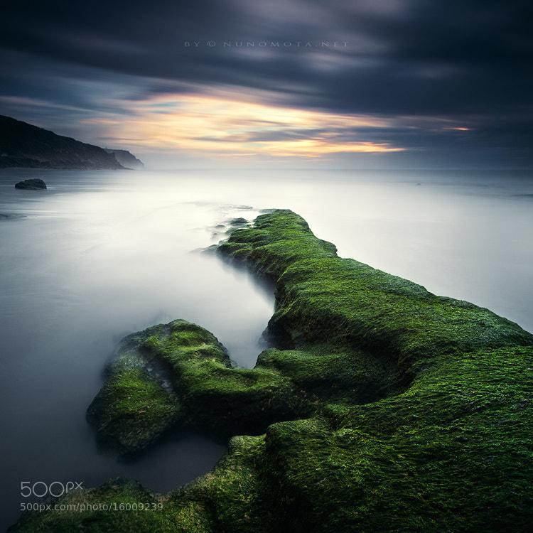 Photograph silence of life by Nuno Mota on 500px