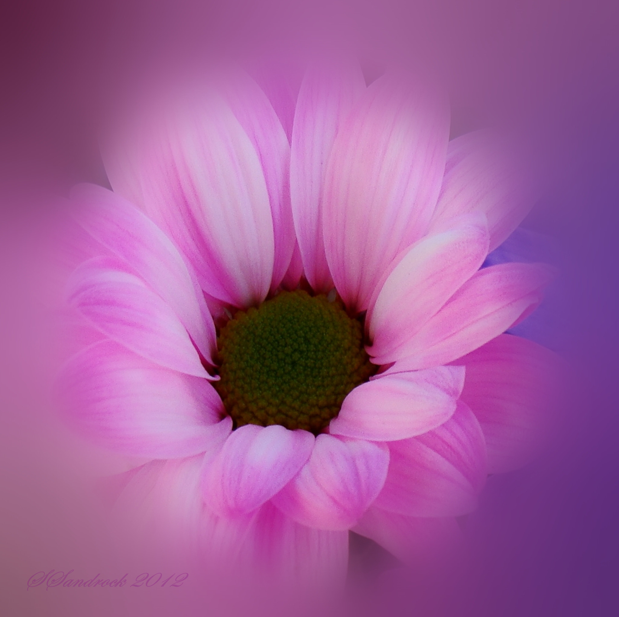 Photograph Pink Passion.... by Silvia Sandrock on 500px