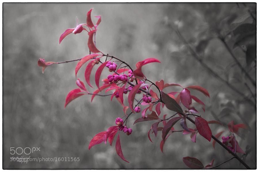 Photograph Autumn (2) by Kai Buddensiek on 500px