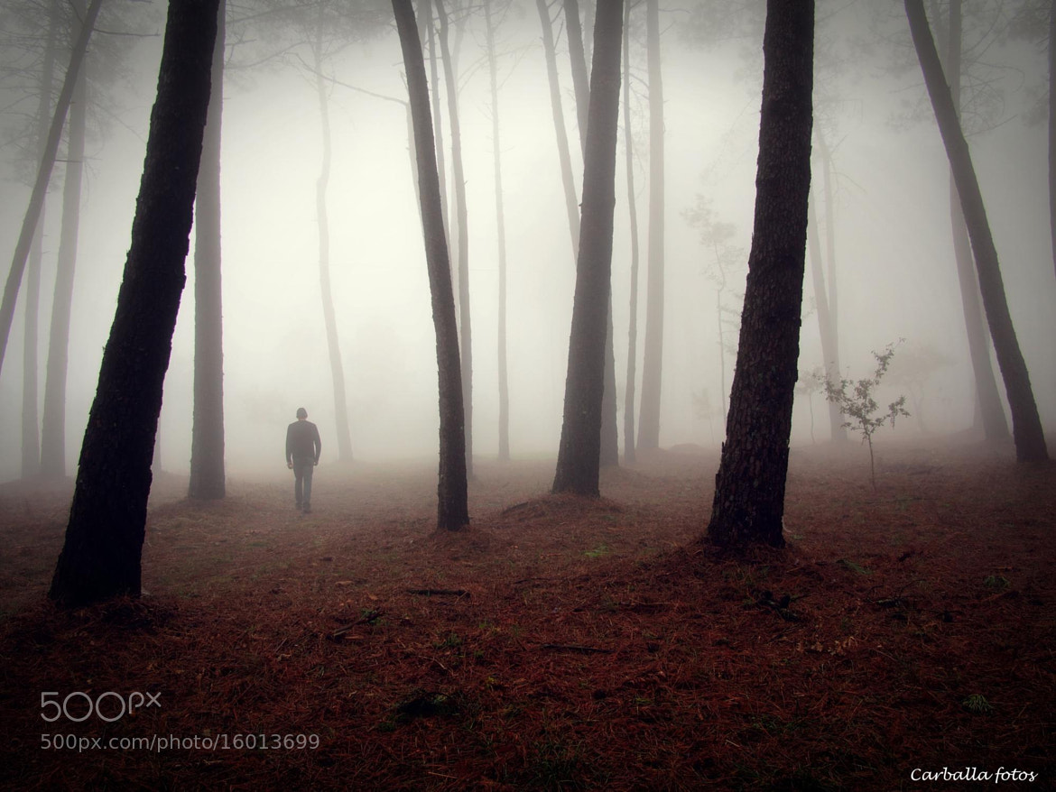 Photograph  In woods by Guillermo  Carballa on 500px