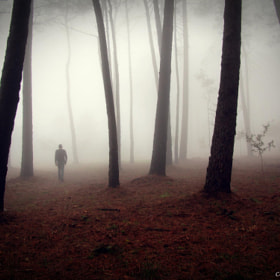 In woods by Guillermo  Carballa (Carballa)) on 500px.com