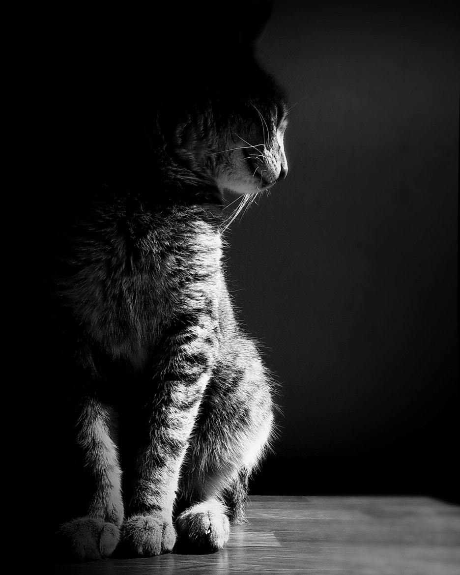 Photograph her highness britney by Dragan Djuric on 500px