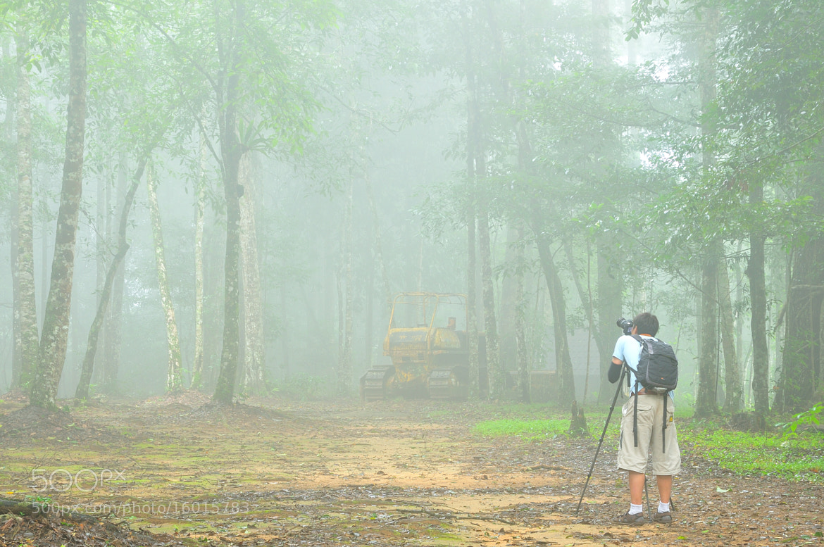 Photograph Mysterious Forest by Photos of Thailand .... on 500px