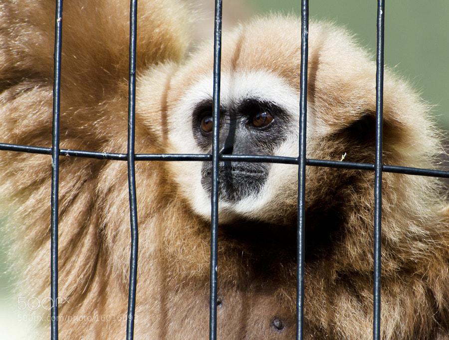 Photograph Captivity by Christina Skov on 500px