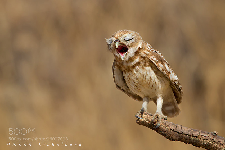 Photograph I'm tired by Amnon Eichelberg on 500px
