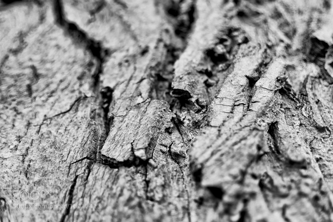 Photograph Bark by Sascha Reichhardt on 500px