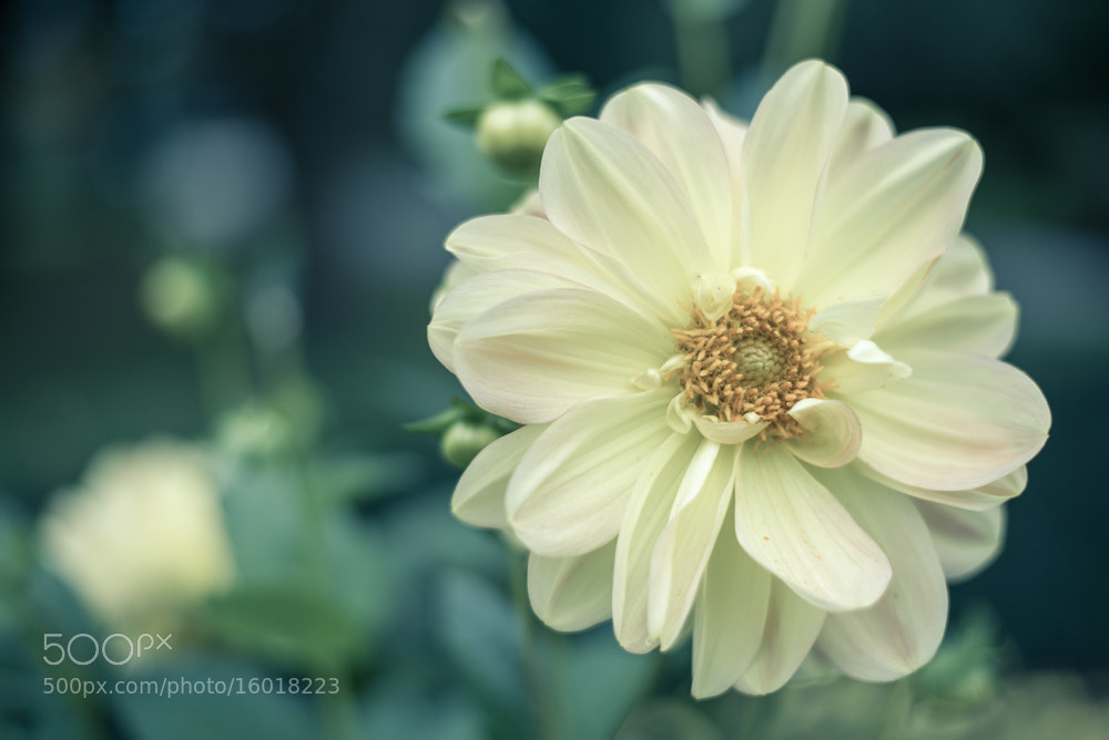 Photograph flower by robert rakobitsch on 500px