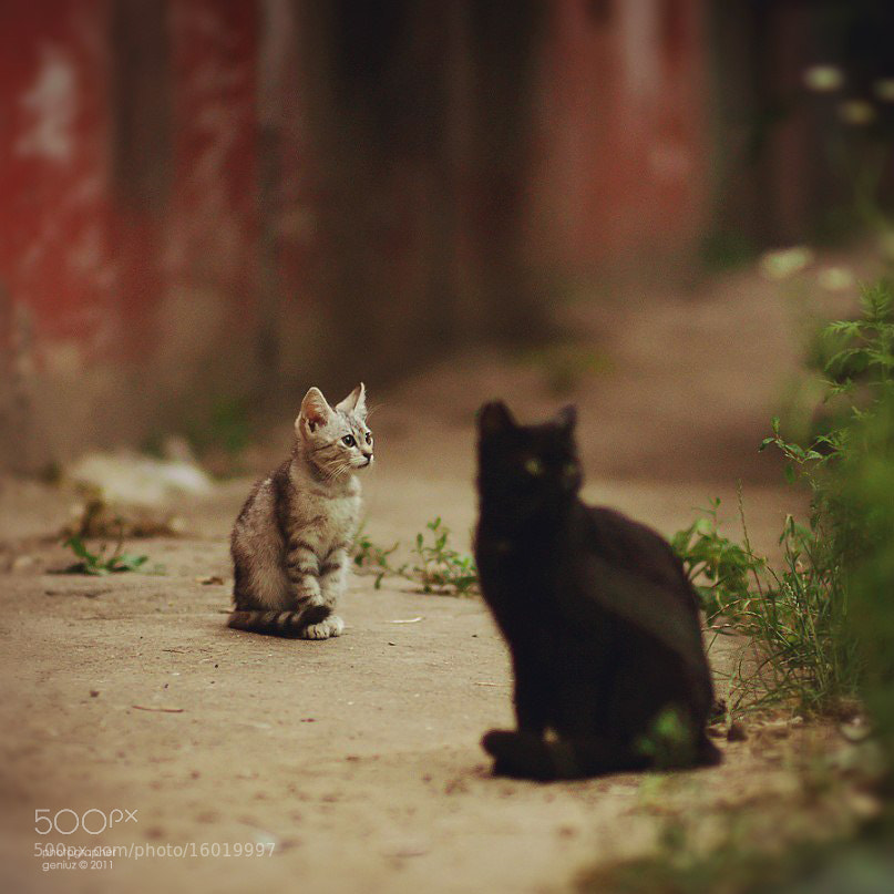 Photograph street cats by Alexander Mihailov on 500px