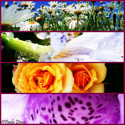 Photograph Flowers collage by Paola Zema on 500px