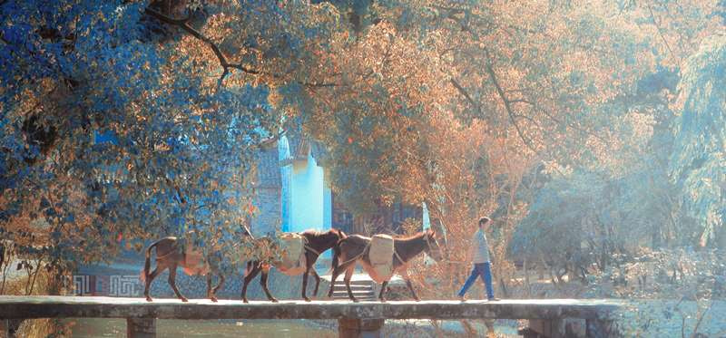 Photograph  lead horses in the sun by CharmingCG  on 500px