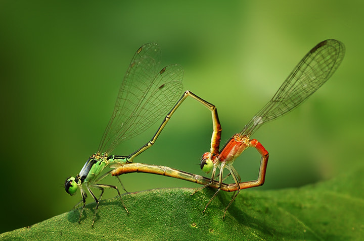 Photograph Mating too by Firman Afrianto on 500px