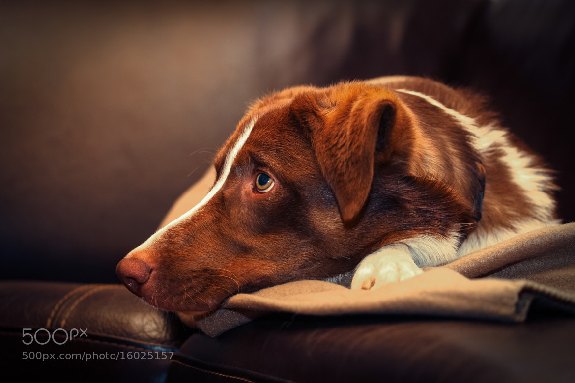 Photograph Couch potatoes ... by Mathias Ahrens on 500px