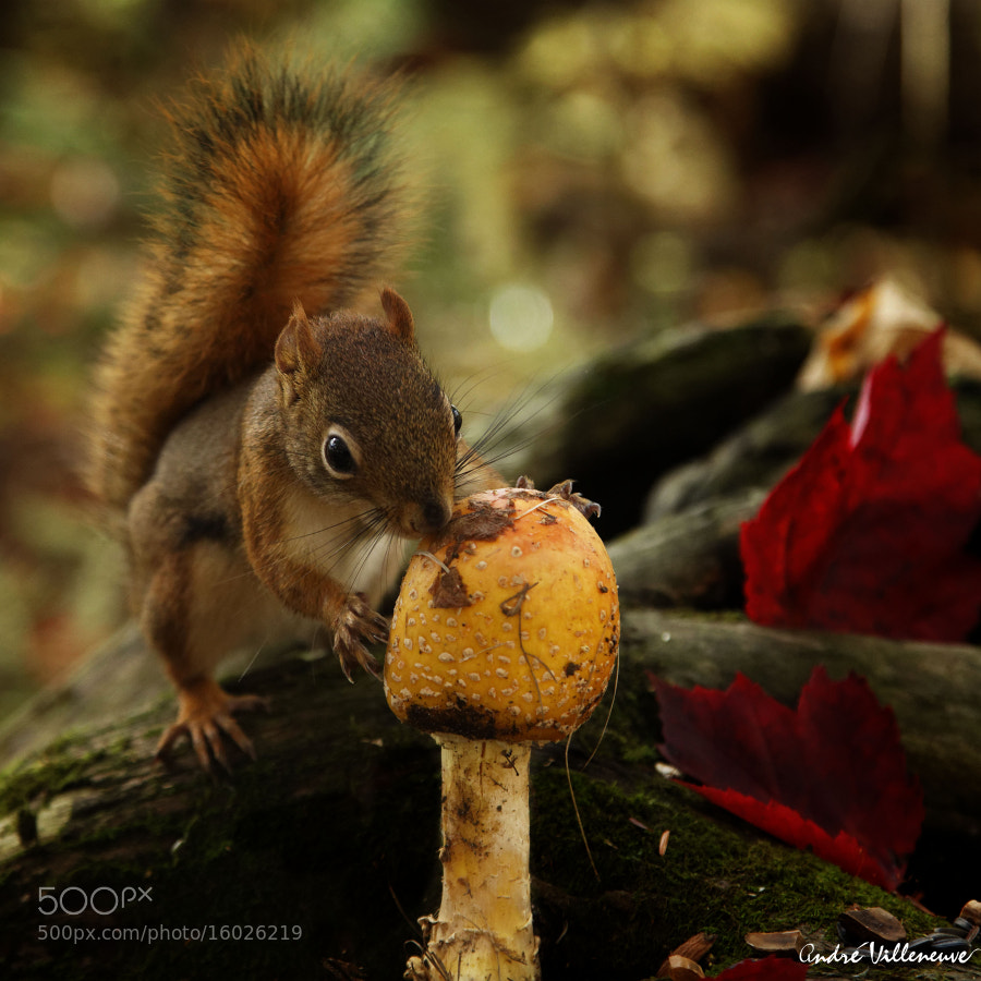Photograph Bon appetit by Andre Villeneuve on 500px